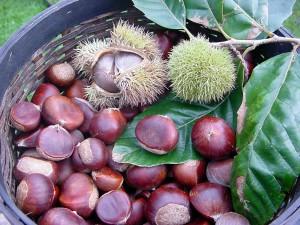 chestnut_200
